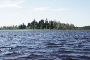 Matinsekter - proteinrik mat och snålare vattenåtgång