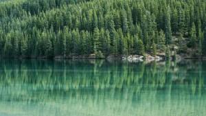 bild på skog och vatten. Inlägg varför mäta hållbarhet