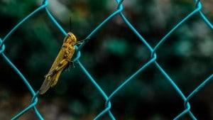 Nya livsmedel, här bild på insekt