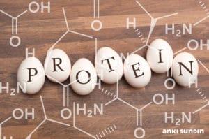 vilket protein är bäst